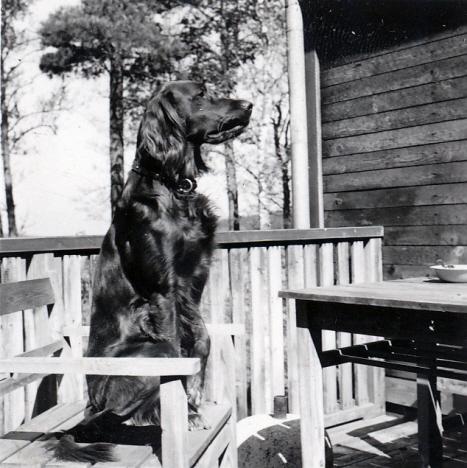 Atou på terrasstol, Holken (cirka 1950)