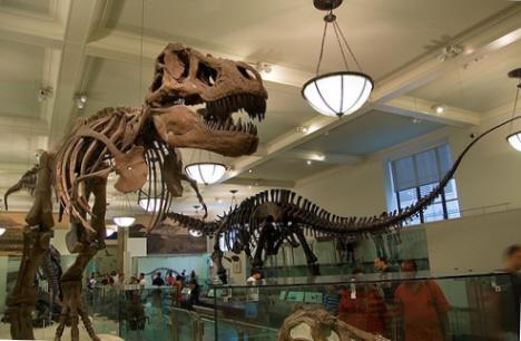 Skelett av dinosaurer, Naturhistoriska museet, New York (internet)