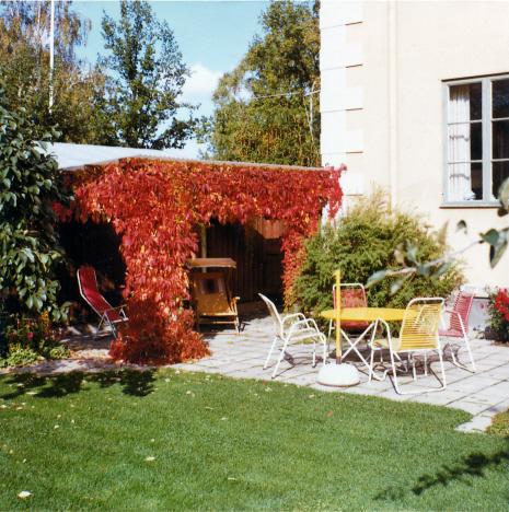 Utematplatsens röda vildvin i oktober, Skyttegatan, Örebro (1971)